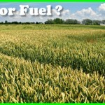 Food or fuel