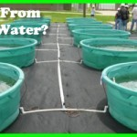 Algae From Waste Water