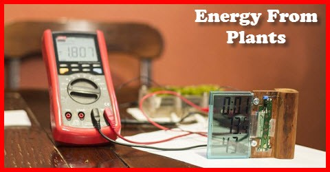 Energy from plants