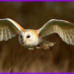 Silent Wings